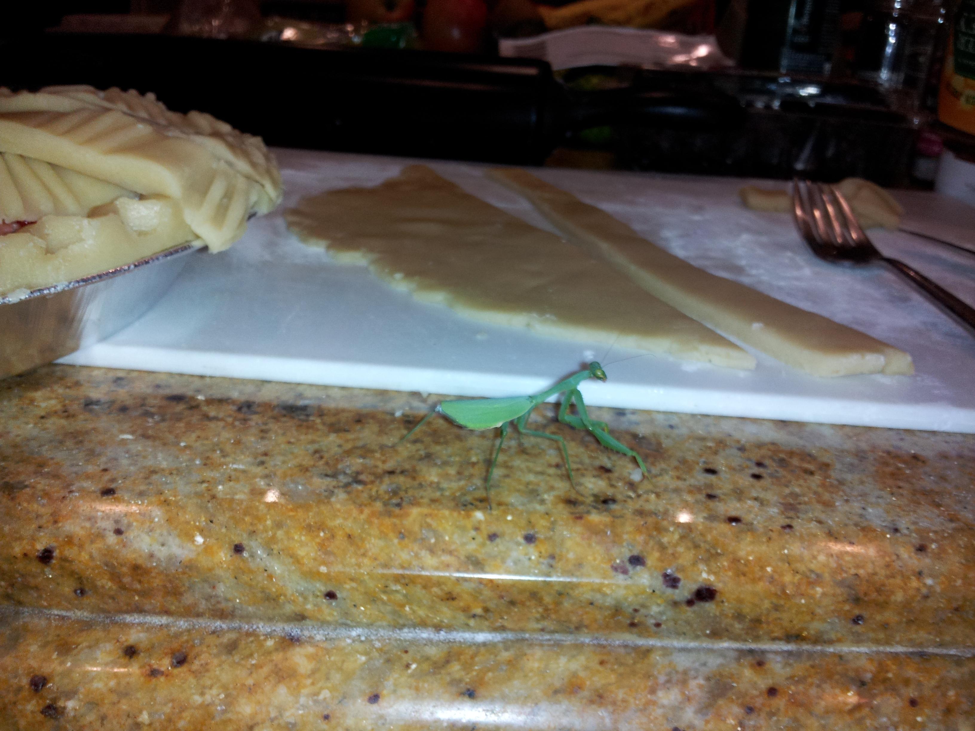 Praying mantis sends a message navigating vita by biocorpaavc