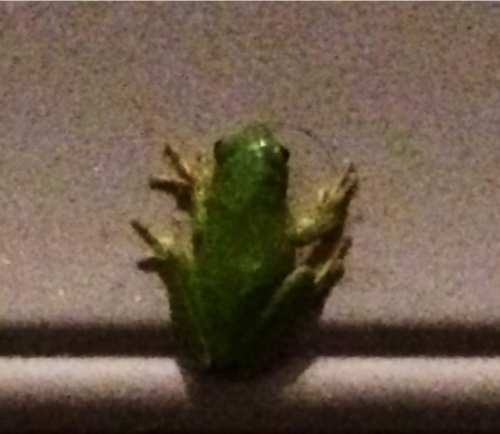 friendfrog